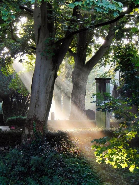 • The Hague, Begraafplaats (Cemetery) Nieuw Eykenduynen august 4, 2014.